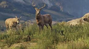 Onto the Land – A GTA V Wildlife Documentary